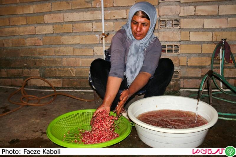 تهیه رب انار در گلستان14