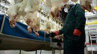 کشتارگاههای گلستان زیر ذرهبین بازرسان؛ کشتار مرغ بدون فاکتور خرید ممنوع شد