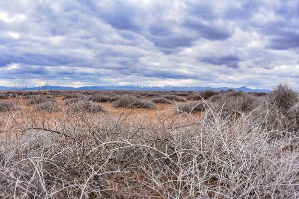 مراتع شمال گنبد کاووس در معرض بیابانی شدن