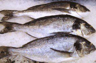 کشف ماهی قاچاق در گلستان