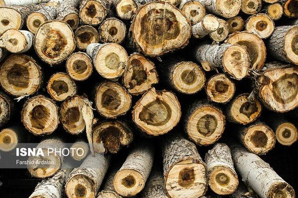 برخی حاشیه نشینان جنگلهای گلستان در کار قاچاق چوب هستند