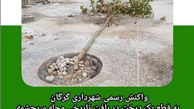 واکنش شهرداری گرگان به قطع یک درخت