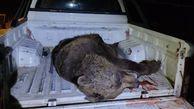 تلف شدن یک قلاده خرس قهوهای بالغ در اثر تصادف در پارک ملی گلستان