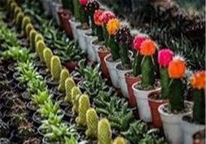 برگزاری نمایشگاه گل و گیاه در گرگان