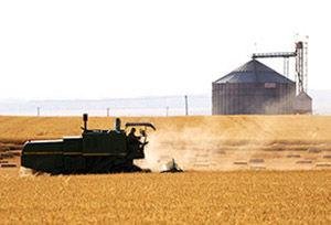 ۷ مرکز آماده خرید گندم و جو کشاورزان در آق قلا