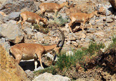 نخستین سایت بازدید از حیات وحش در گلستان ایجاد میشود