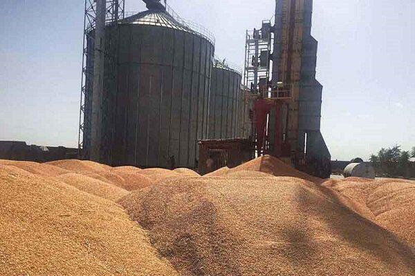 ظرفیت ذخیره سازی گندم در گلستان یک میلیون و ۵۰۰ هزار تن است