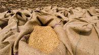 کشف ۶۰۰۰ تن گندم احتکاری در گنبدکاووس