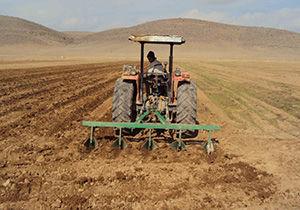 کشت ۱۵ هزار هکتار گندم در آزادشهر
