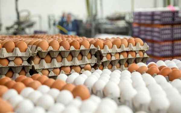 قیمت تخم مرغ در بازار (۵ تیر ۹۹) + جدول