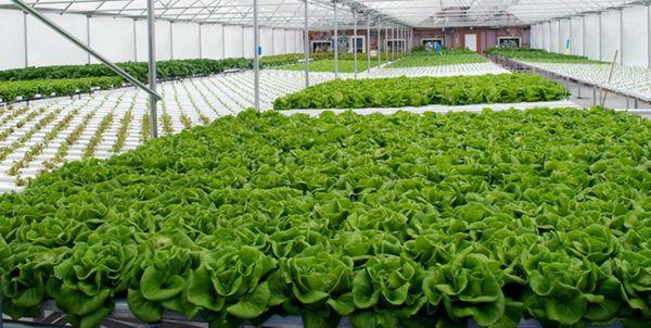 اختصاص 400 میلیارد تومان از محل سفر رئیس جمهور برای توسعه کشت گلخانهای گنبدکاووس