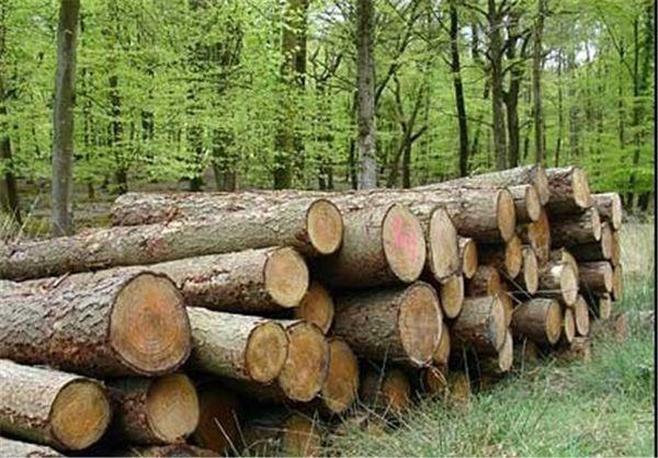 نخستین پروژه زراعت چوب استان گلستان در مراتع آزادشهر اجرا شد