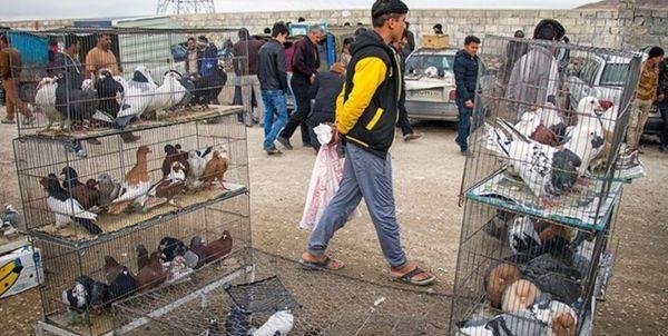 تعطیلی بازار پرندهفروشان در گنبدکاووس