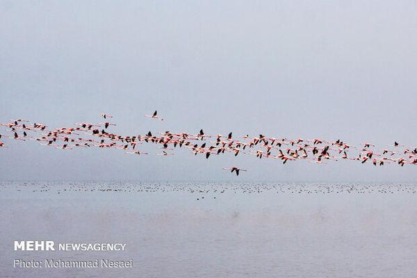 غفلت از ظرفیت هزاران پرنده مهاجر/ پرنده نگری در گلستان حامی ندارد