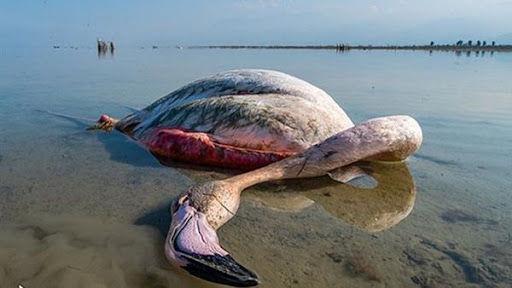 احتمال تکرار فاجعه مرگ پرندگان بر اثر بوتولیسم در خلیج گرگان