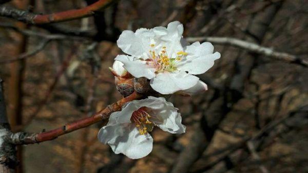 هوای گلستان بهاری میشود