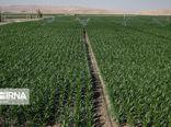 تقویت بخش کشاورزی، مصداق حمایت از تولید در گلستان است
