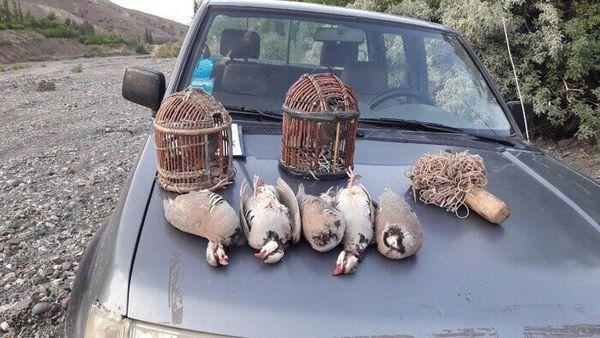 صیادان پرندگان شکاری در گلستان دستگیر شدند