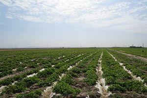 کشف تصرف بیش از ۳۰ هزار متر مربع اراضی ملی استان