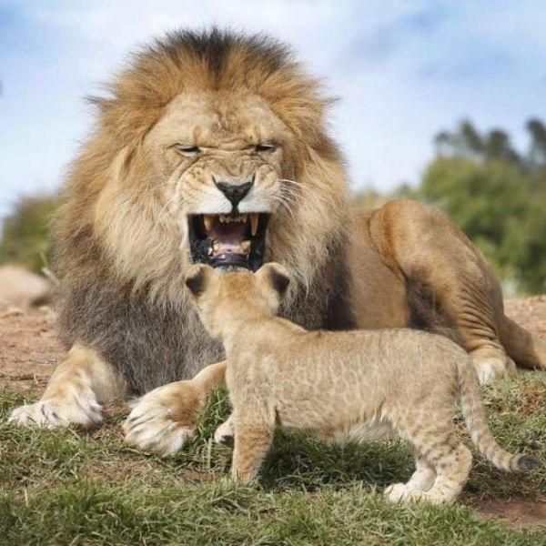 عکس/خشم پدرانه سلطان