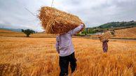 تولید بیش از یک میلیون و ۵۰۰ هزار تن گندم,جو و کلزا در گلستان