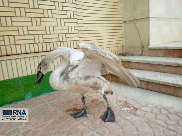 تیمارداری 90 پرنده مصدوم در استان