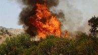 آتشسوزهای جنگل گلستان تعمدی است