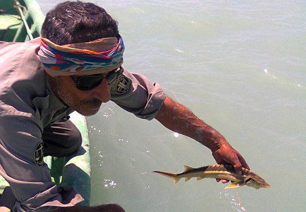 ماهیان خاویاری نابالغ از تور صیادان گمیشانی نجات یافتند