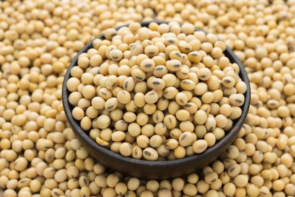 توزیع ۲ هزار تن بذر سویا در گلستان آغاز شد