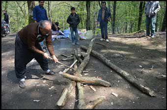 گزارش تصویری / درختان جنگل های کردکوی، قربانی آتش چای و کباب سیزده به در