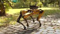 استفاده از سگ رباتی برای قرنطینه +فیلم