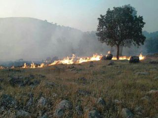 آتش سوزی منابع طبیعی گلستان