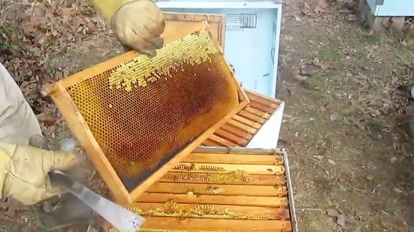 میزان تولید سالانه عسل شهرستان نزدیک به ۷۰ تن برآورد می شود