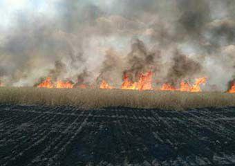 آتش سوزی 15 هکتار از مزارع گندم استان گلستان