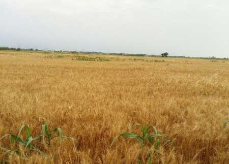 فروش بیش از یک میلیون تن محصول کشاورزان گلستانی
