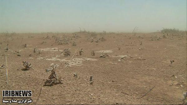 گزارش مکتوب... تَرَک خشکسالی بر چهره سبز گلستان