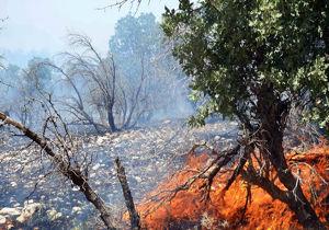 اطفا آتش سوزی منطقه میانکاله /بیش از ۳۰۰ هکتار در آتش سوخت
