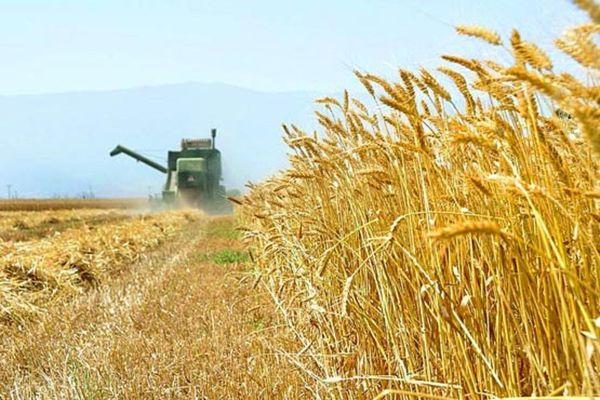 پیش بینی برداشت بیش از یکمیلیون و ۵۰۰ هزار تن گندم در گلستان