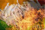 مرغ های حلالی که به دست داعش به آتش کشیده شد!