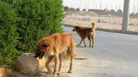 مشکل سگهای ولگرد در آق قلا
