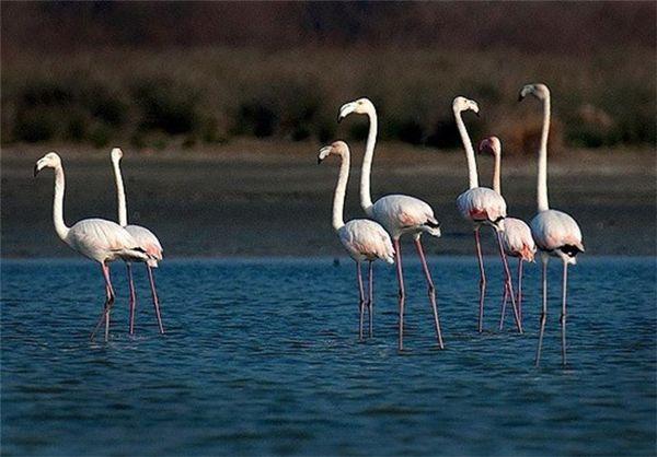 بازدید بیش از ۶ هزار گردشگر داخلی و خارجی از تالابهای بینالمللی استان گلستان