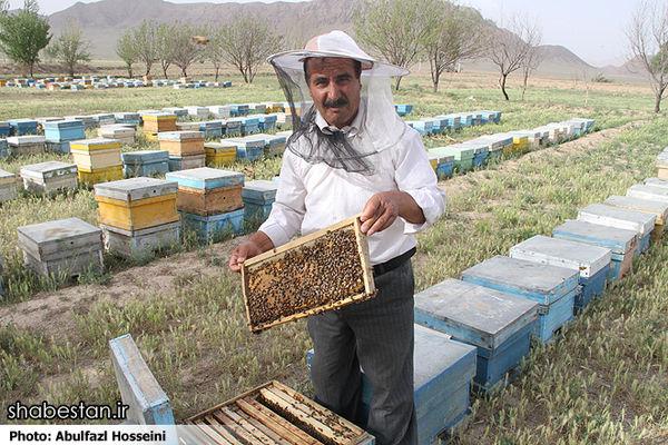 پوشش ۱۰۰ درصدی بیمه کلنی زنبورعسل در برابر حوادث قهری/ وجود داروهای تقلبی زنبورعسل در بازار