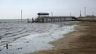 لایروبی خلیج گرگان برای ادامه حیات آبزیان این خلیج ضروری است