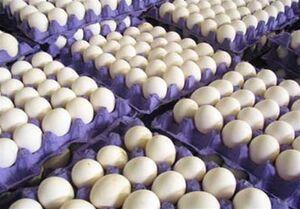 چرا قیمت تخم مرغ بالا رفت؟