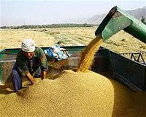 پرداخت بیش از ۲۴۰ میلیارد تومان به کشاورزان گلستانی
