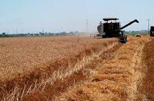 ثبت اطلاعات 4هزار و 600 کشاورز گلستانی در سامانه بورس