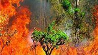 کاهش رطوبت و سرکشی شعلهها در جنگل/فناوری های نوین بکارگیری شود