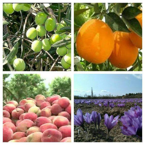 افزایش 200 هزار تنی تولیدات کشاورزی گلستان