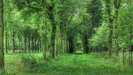 طرح کاداستر در حدود ۳۰ هزار هکتار از جنگل های هیرکانی اجرا شد