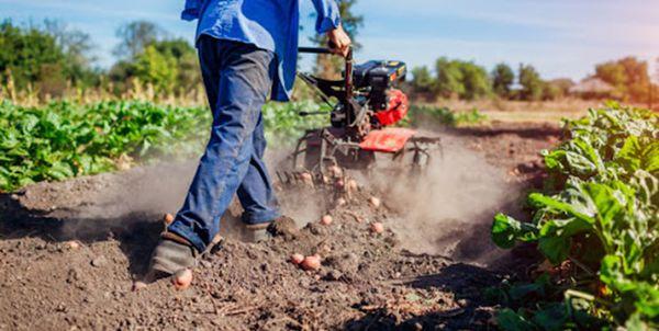 بیش از ۷۵۰میلیارد تومان تسهیلات در بخش کشاورزی پرداخت شد